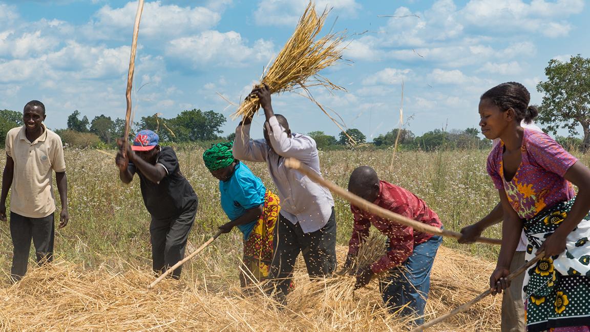 Norges Vel Comrice Tanzania Rice Intro Africa