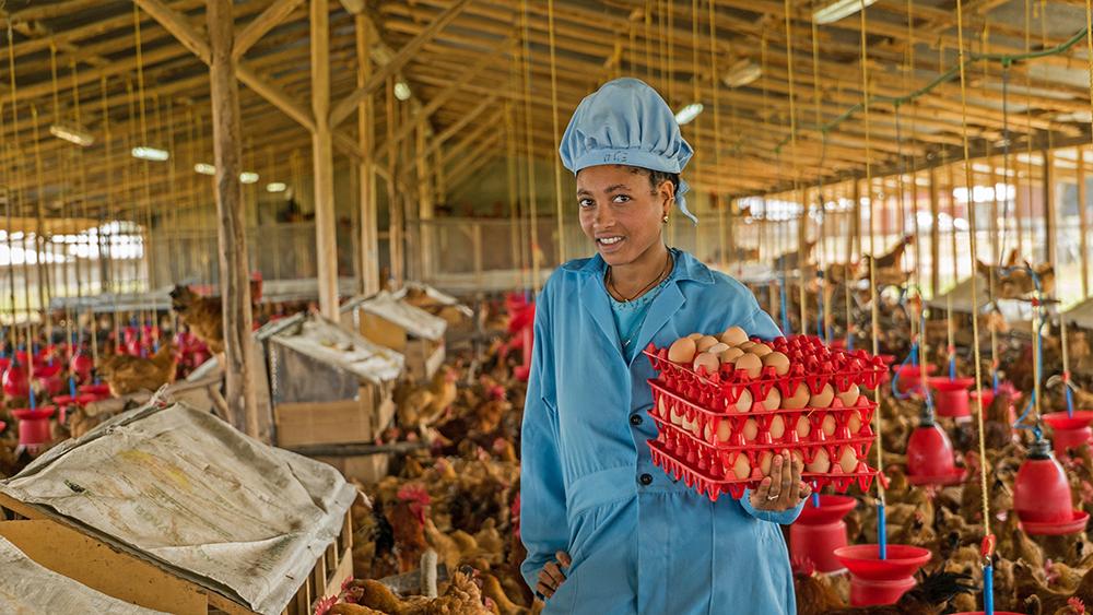 Ethio Chicken Ethiopia Finnfund Intro Africa